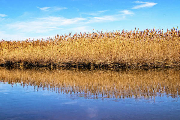 Photograph - Marsh Grass Reflections by Carolyn Derstine