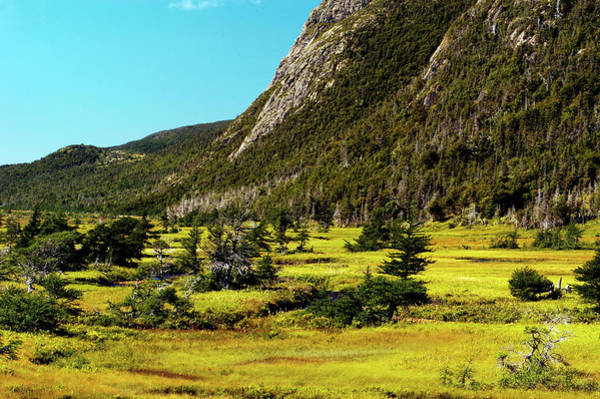 Gros Morne Photograph - Marsh Grasses In The Tablelands Area Of by Myloupe/uig