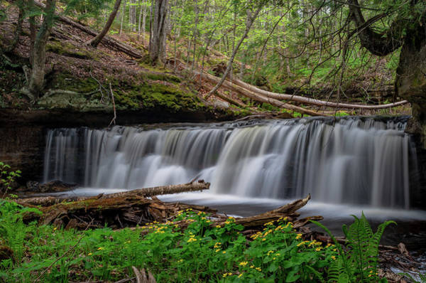 Photograph - Marsh Marigolds At Mosquito Falls by Gary McCormick