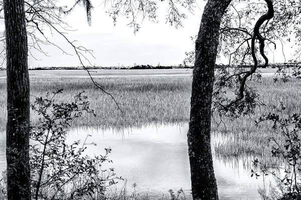 Photograph - Marsh View At Charles Towne Landing by John Rizzuto