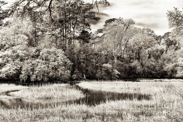 Photograph - Marshes At Charles Towne Landing by John Rizzuto