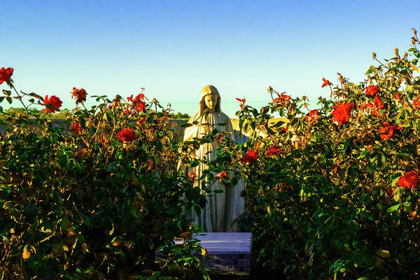 Wall Art - Photograph - Mary Surrounded By Roses  by Edward Garey