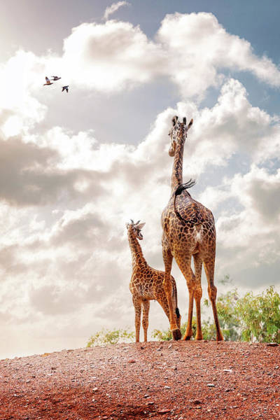 Wall Art - Photograph - Masai Giraffe At Phoenix Zoo by Susan Schmitz
