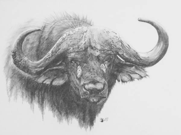 Drawing - Massive by Barbara Keith