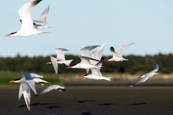 Photograph - Masters Of Flight by Robert Potts