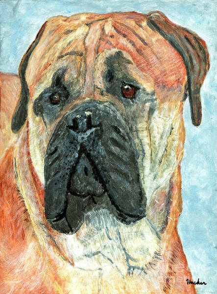 Wall Art - Painting - Mastiff Painting by Timothy Hacker