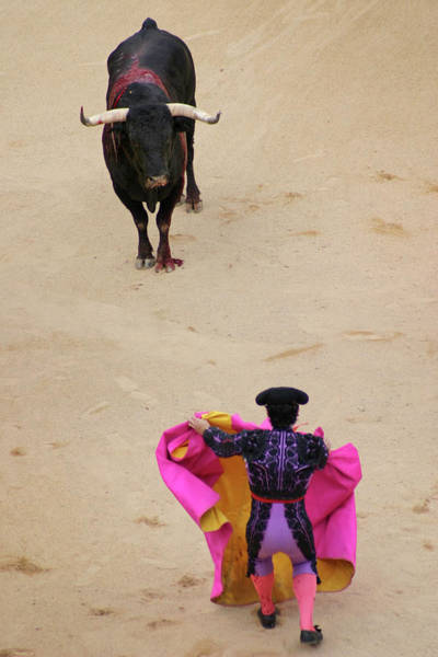 Traditional Clothing Photograph - Matador Fighting Bull In Plaza De Toros by Dominic Bonuccelli
