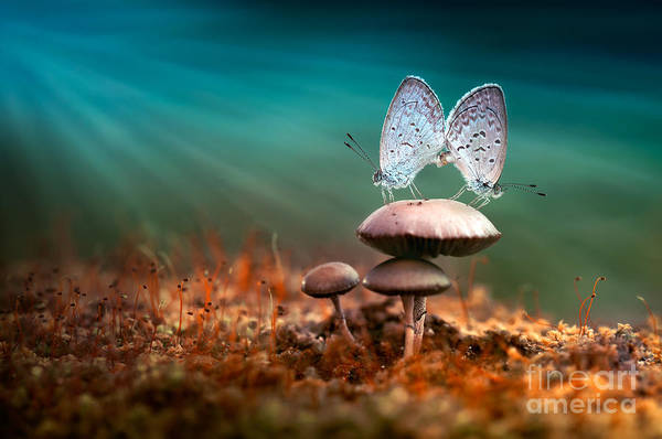 Wall Art - Photograph - Mating Butterflies On Mushroom With by Robby Fakhriannur
