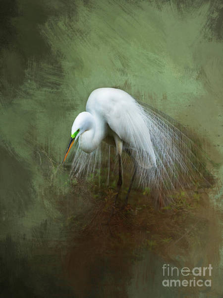 Egret Photograph - Mating Season by Marvin Spates