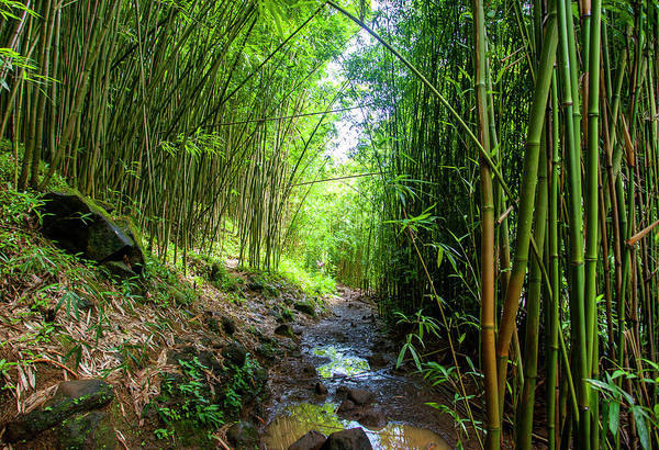 Photograph - Maui Bamboo Forest by Anthony Jones