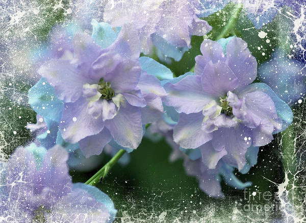 Wall Art - Photograph - Mauves And Blues by Elaine Manley