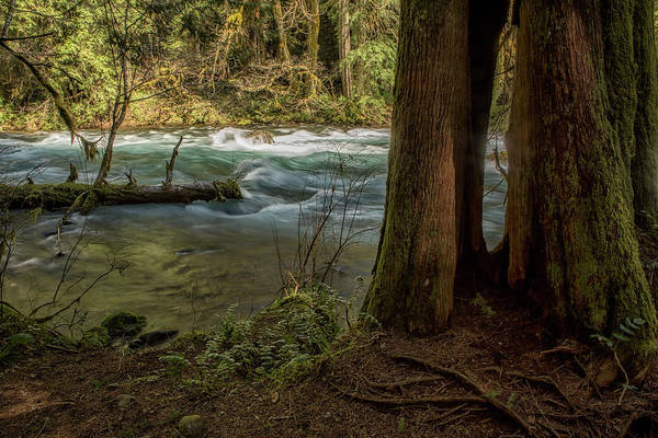 Photograph - Mckenzie River Along The Trail by Belinda Greb