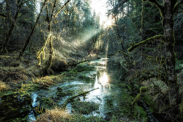 Photograph - Mckenzie River Tributary by Belinda Greb