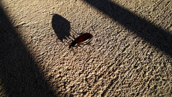 Photograph - Me And My Shadow by Carl Young