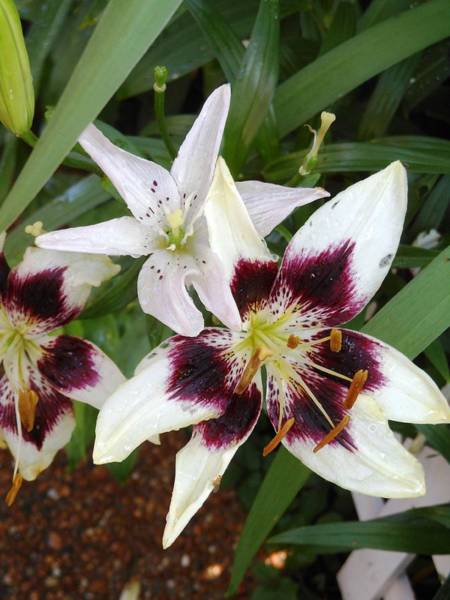 Hurricane Lily Photograph - Me And You by Lord Frederick Lyle Morris - Disabled Veteran