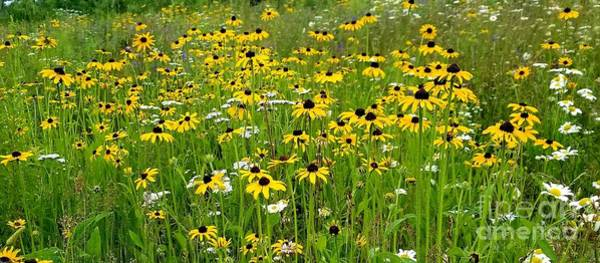 Photograph - Meadow Flowers 1 by Michael Graham