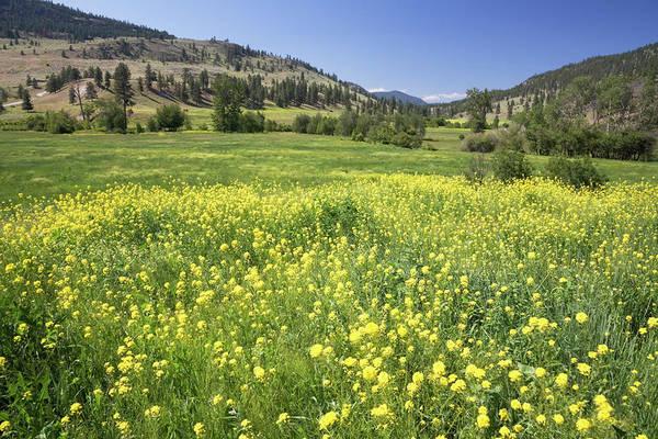 Okanagan Photograph - Meadow In Valley, Okanagan, British by Radius Images