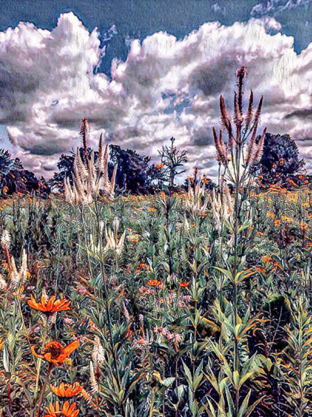 Wall Art - Photograph - Meadow by Sage Photography