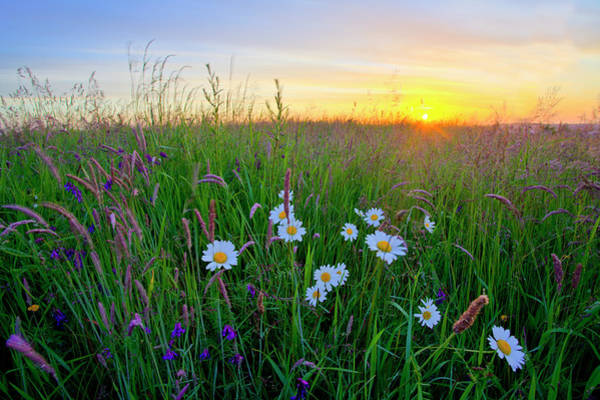 Nottinghamshire Photograph - Meadow Sunrise by Doug Chinnery