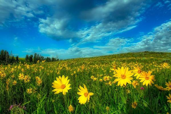 Wall Art - Photograph - Meadow Wildlfowers, Yellowstone National Park by N P S Jim Peaco
