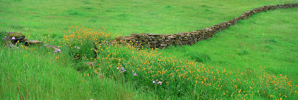 Wall Art - Photograph - Meadow With Stone Wall And Wildflowers by Mint Images - David Schultz