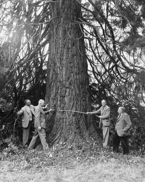 Unit Photograph - Measuring A Redwood by Chris Ware