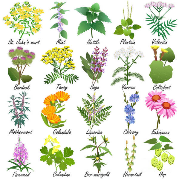 Wall Art - Digital Art - Medicinal And Healing Herbs Collection by Tatiana Liubimova