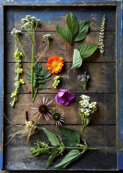 Variation Photograph - Medicinal Healing Herbs And Flowers by Susie Cushner