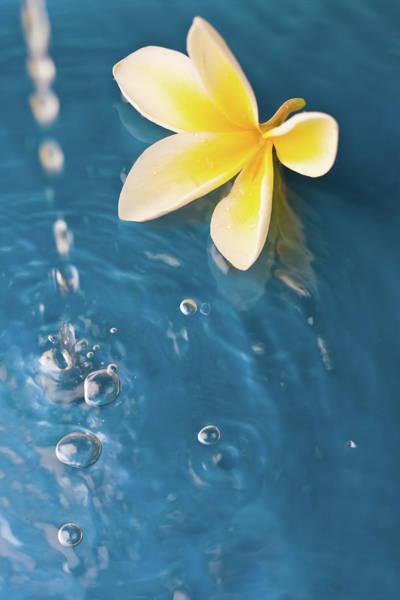 Hawaiian Flower Photograph - Meditation Background by Dra schwartz