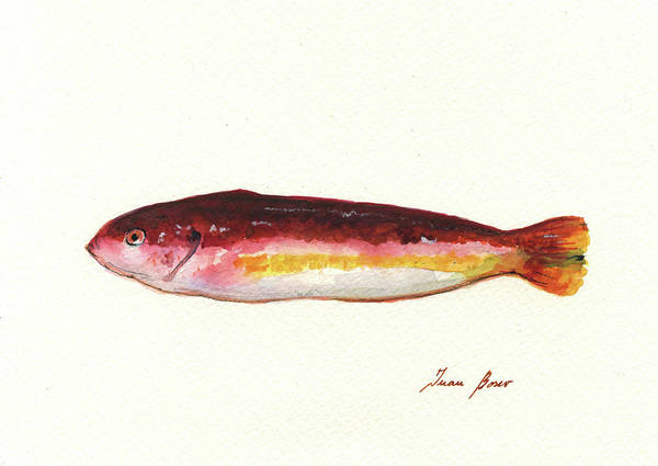 Wall Art - Painting - Mediterranean Rainbow Wrasse by Juan Bosco