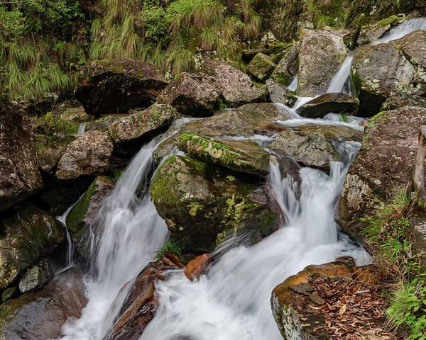Photograph - Medium Cascade by William Dickman