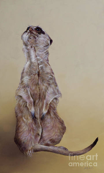 Wall Art - Painting - Meerkat Three by Odile Kidd