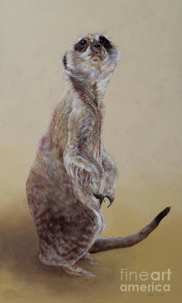 Wall Art - Painting - Meerkat Two by Odile Kidd