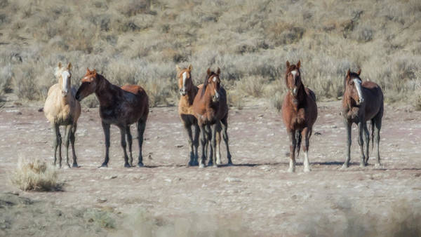 Photograph - Meet The Boys In The Band by Belinda Greb
