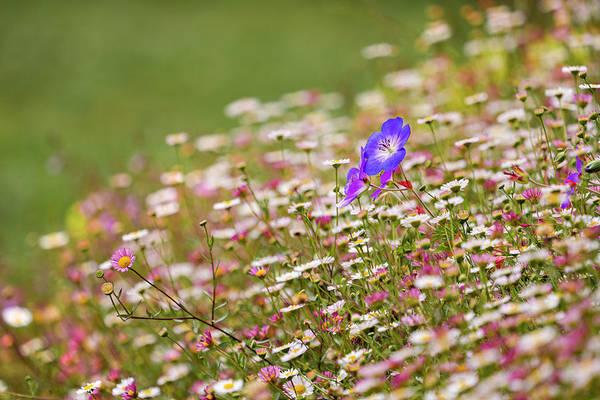 Photograph - Mendocino Coast Botanical Gardens by Jonathan Hansen