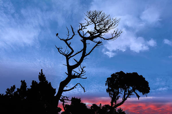 Wall Art - Photograph - Mendocino Sunrise Silhouettes  by Kathleen Bishop