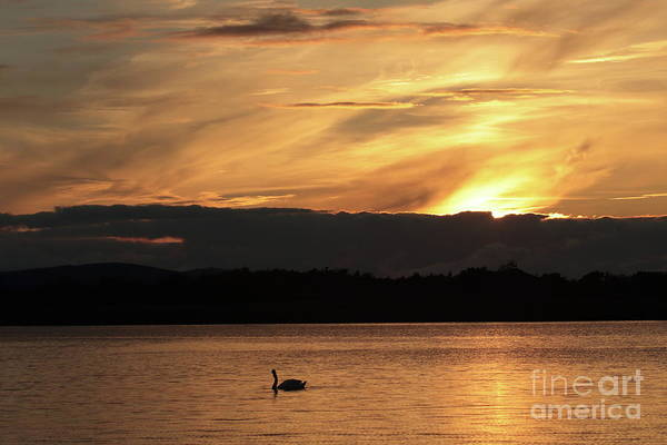 Photograph - Menlo Sunset 2 by Peter Skelton