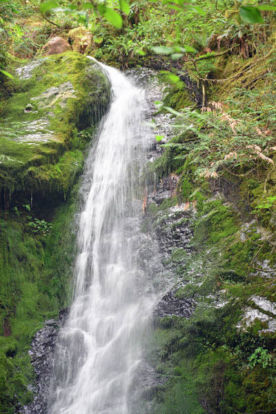 Photograph - Merriman Falls Olympic National Park A by Bruce Gourley