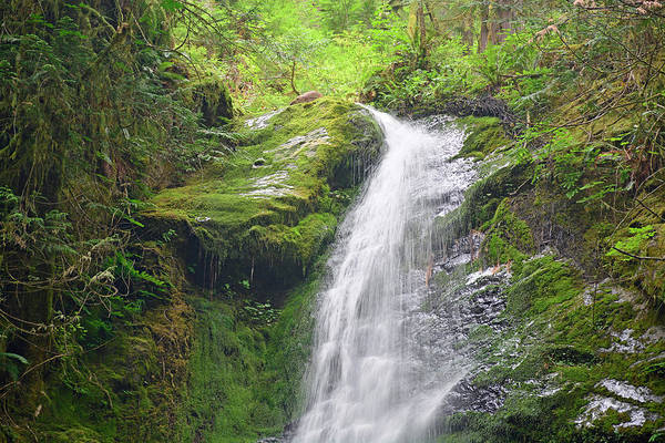 Photograph - Merriman Falls Olympic National Park C by Bruce Gourley