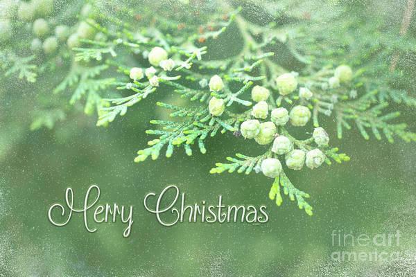 Photograph - Merry Christmas - Junipir Bow by Beve Brown-Clark Photography