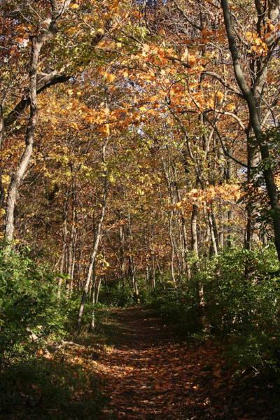 Photograph - Merwin Falling Trail by Dylan Punke