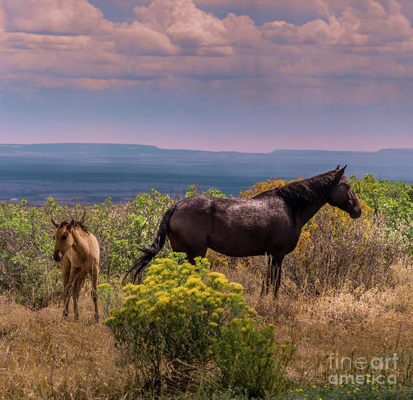 Photograph - Mesa Verde Wild Horses #2 by Blake Webster