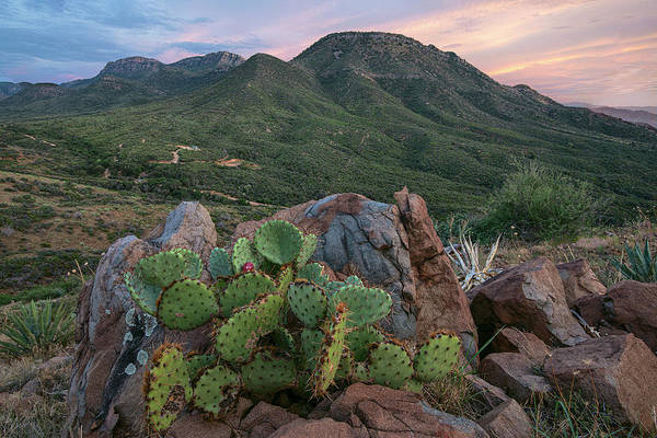 Wall Art - Photograph - Mescal Mountain Prickly Pear Sunset by Dave Dilli