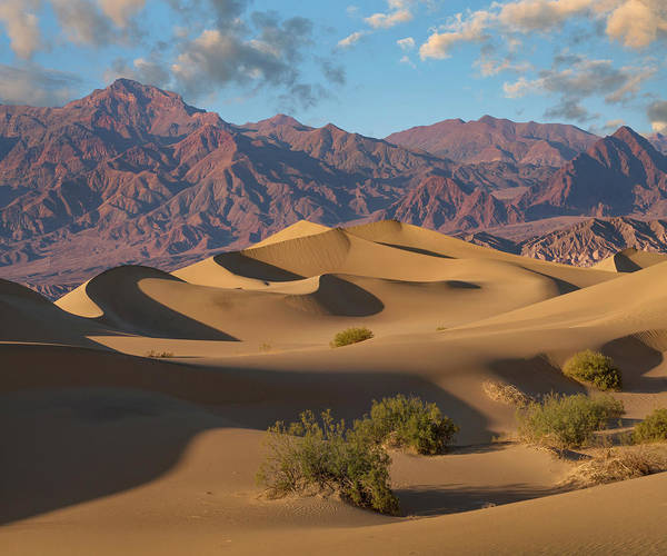 Photograph - Mesquite Flat Sand Dunes, Death Valley by