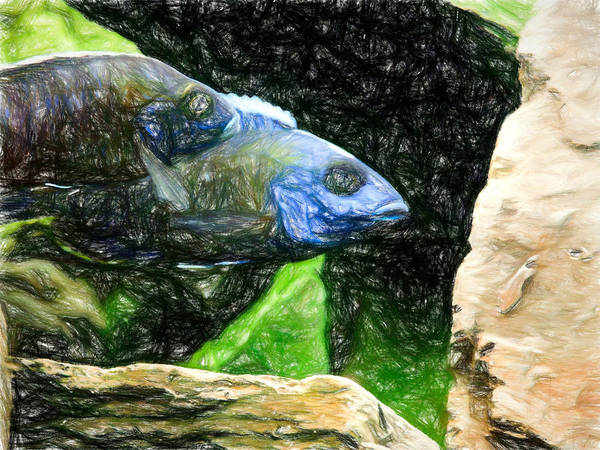 Digital Art - Metallic Peacock Cichlids by Don Northup