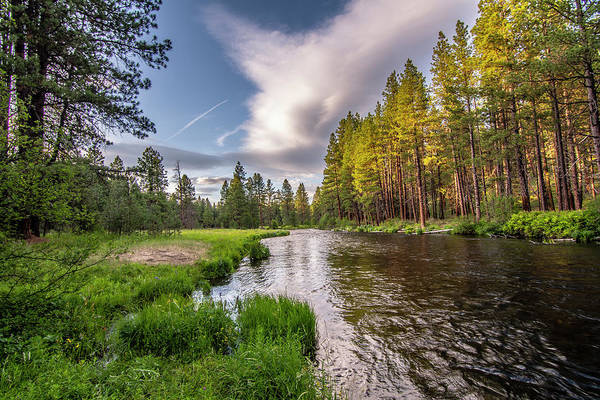 Photograph - Metolius River Evening by Matthew Irvin