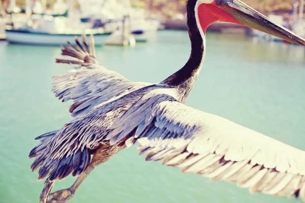 Prehistoric Era Wall Art - Photograph - Mexico Brown Pelican Marina Flight by Eyecrave