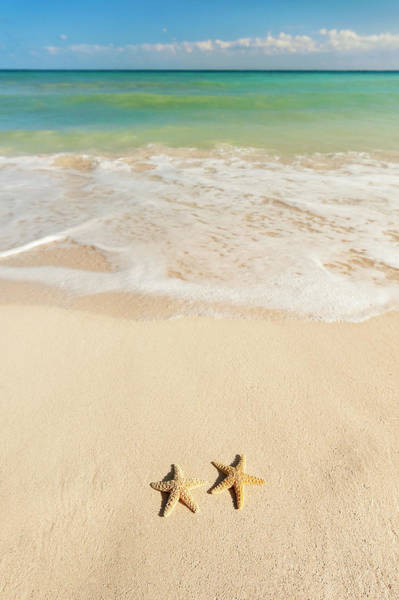 Yucatan Wall Art - Photograph - Mexico, Yucatan, Two Starfish On Beach by Tetra Images