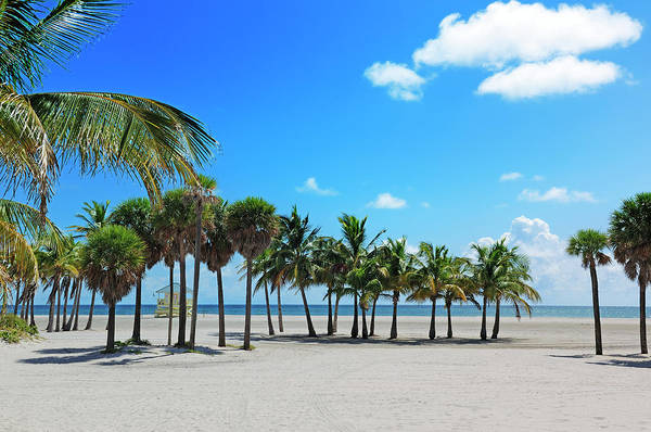 Key Biscayne Photograph - Miami Beach Tropical Paradise by Jfmdesign