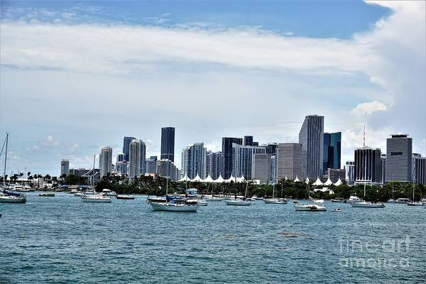 Photograph - Miami3 by Merle Grenz